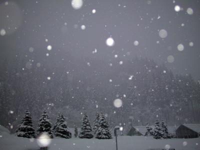 雪が降る(住所:石川県白山市佐...